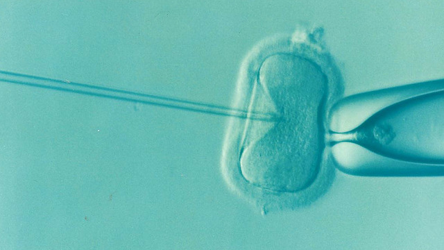 What is IVF?